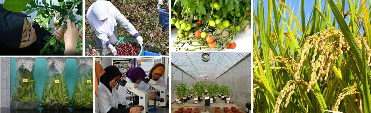 Sarjana-Muda-Sains-Agroteknologi-(Sains-Tanaman)